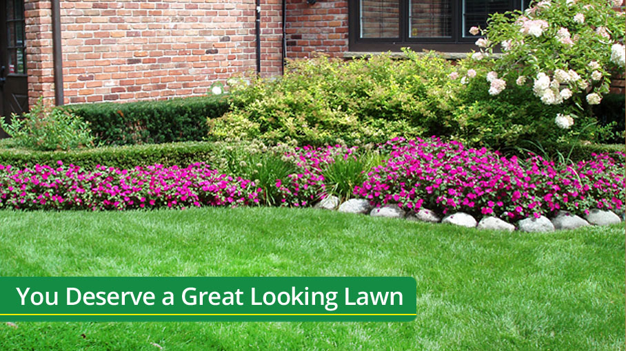 You Deserve a Great Looking Lawn